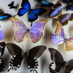 """Butterflies"" by Michelle Heyden © Michelle Heyden"